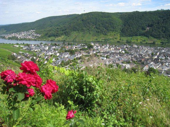 Rhein 8